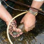 Fishing Skills Day – Part 2 – Fishing Spiders