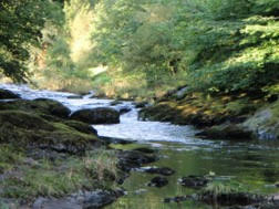 West Wales Rivers Trust – Doethie and Upper Tywi Restoration Projects